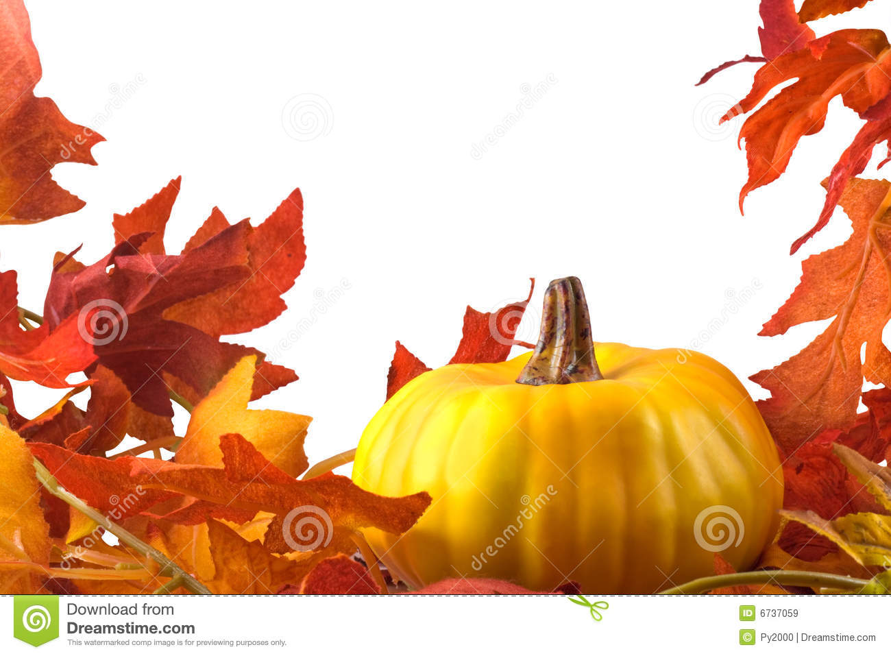 Thanksgiving Stock Image Image Of Colorful Leaf Holiday