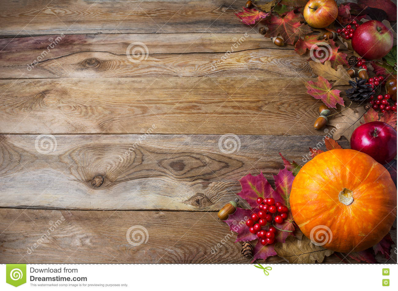thanksgiving or fall greeting background with pumpkins and