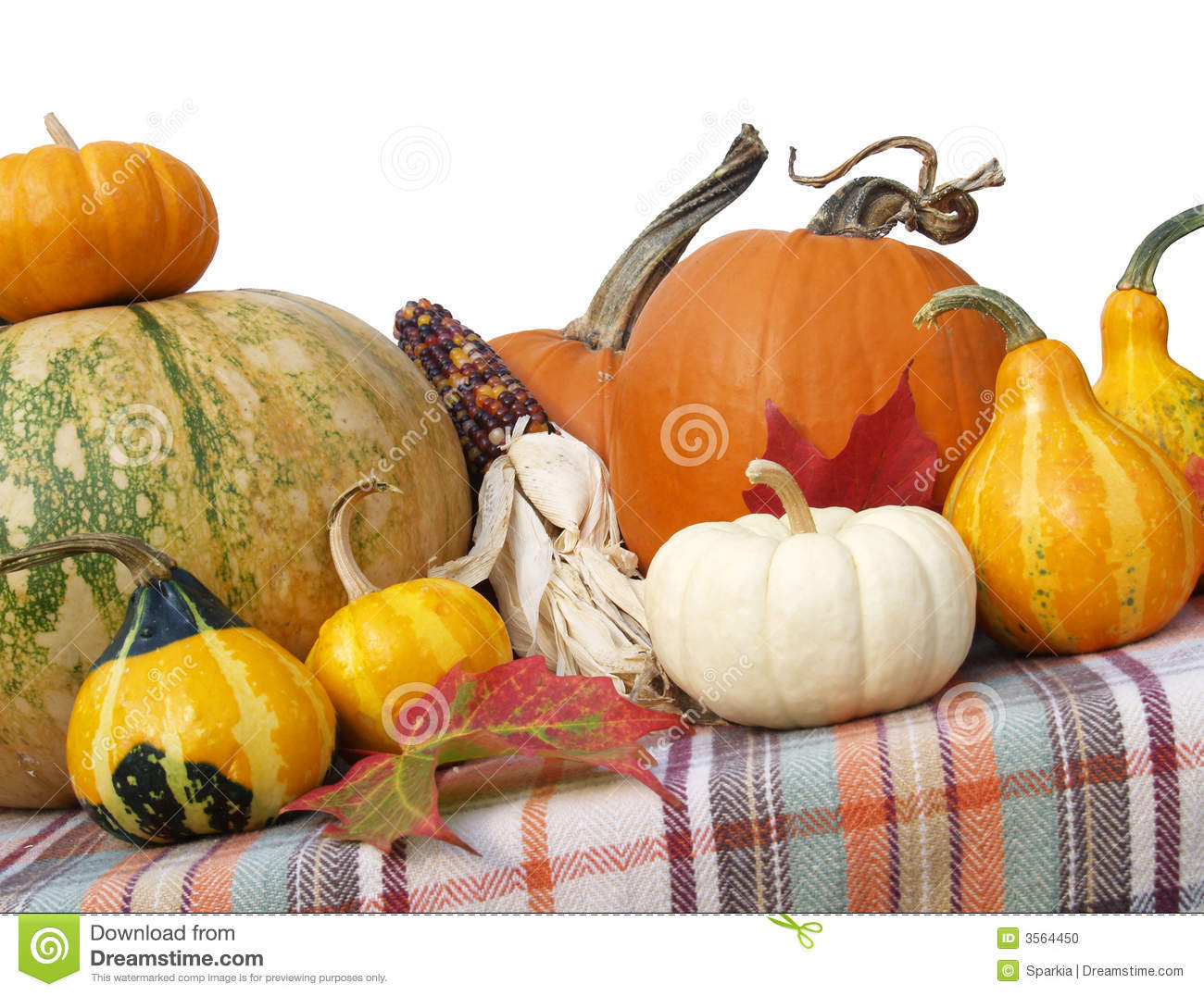 Thanksgiving gourds pumpkins stock photo image
