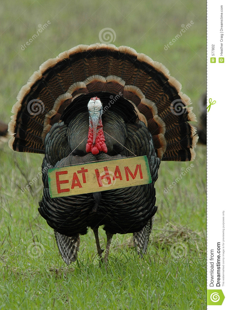 Thanksgiving Humor:  Eat Ham  Turkey