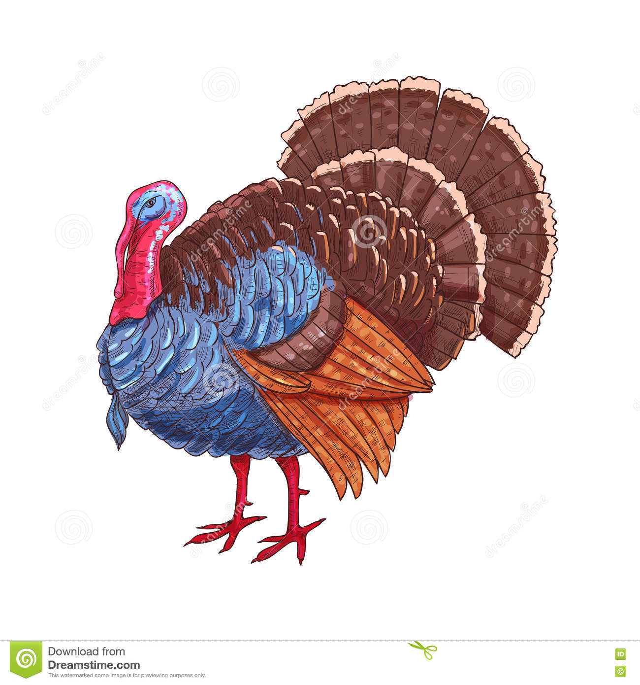 Thanksgiving Isolated Turkey Vector Color Sketch Stock Vector