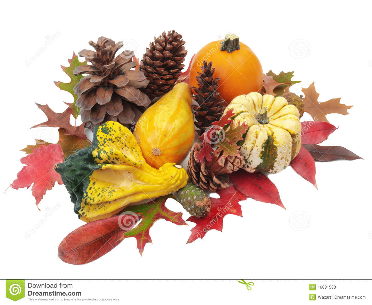 Download Thanksgiving Still Life With Pumpkins, Gourds And Stock Image    Image Of Background,