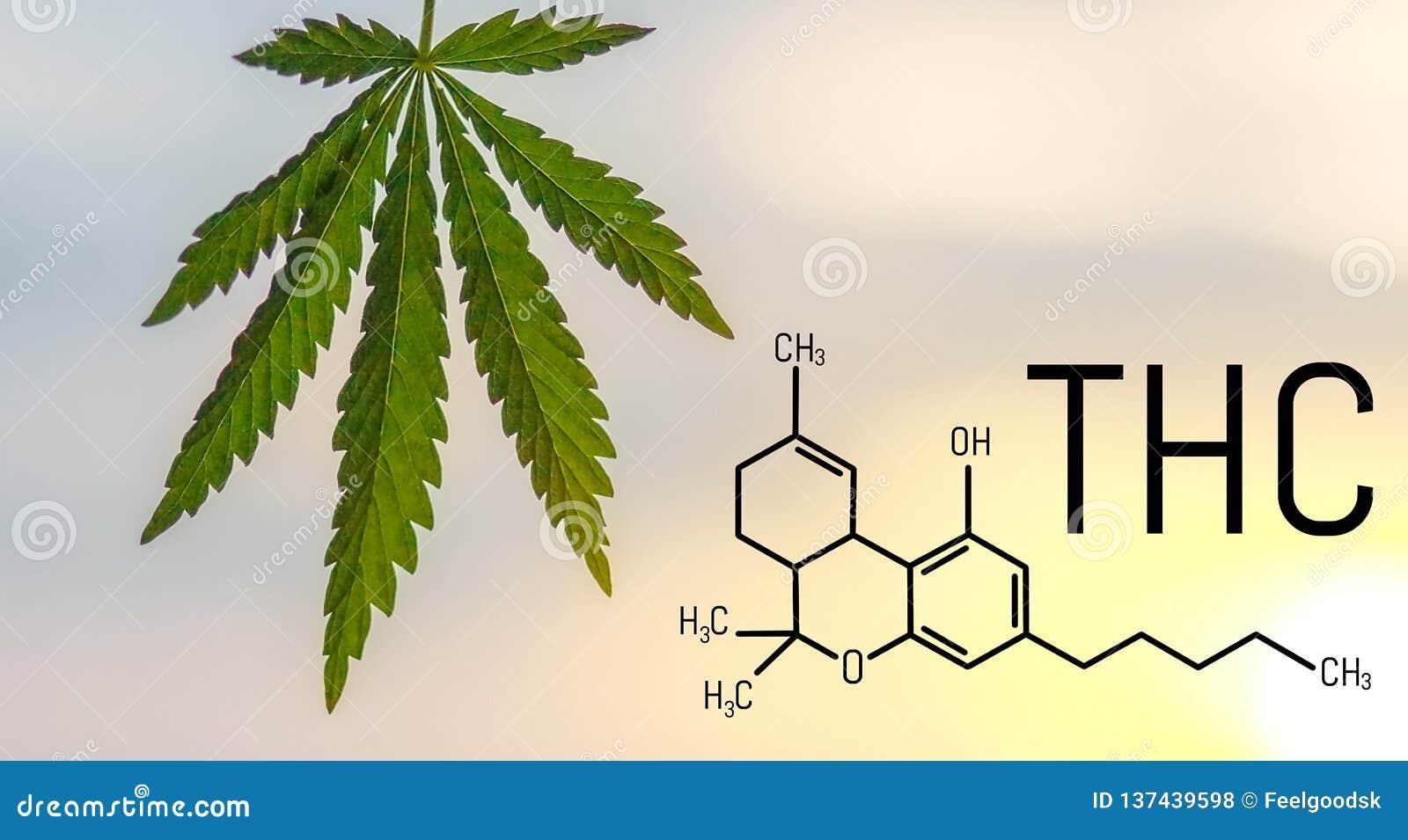 THC Tetrahydrocannabinol惯例对神经起显著作用的大麻发芽大麻