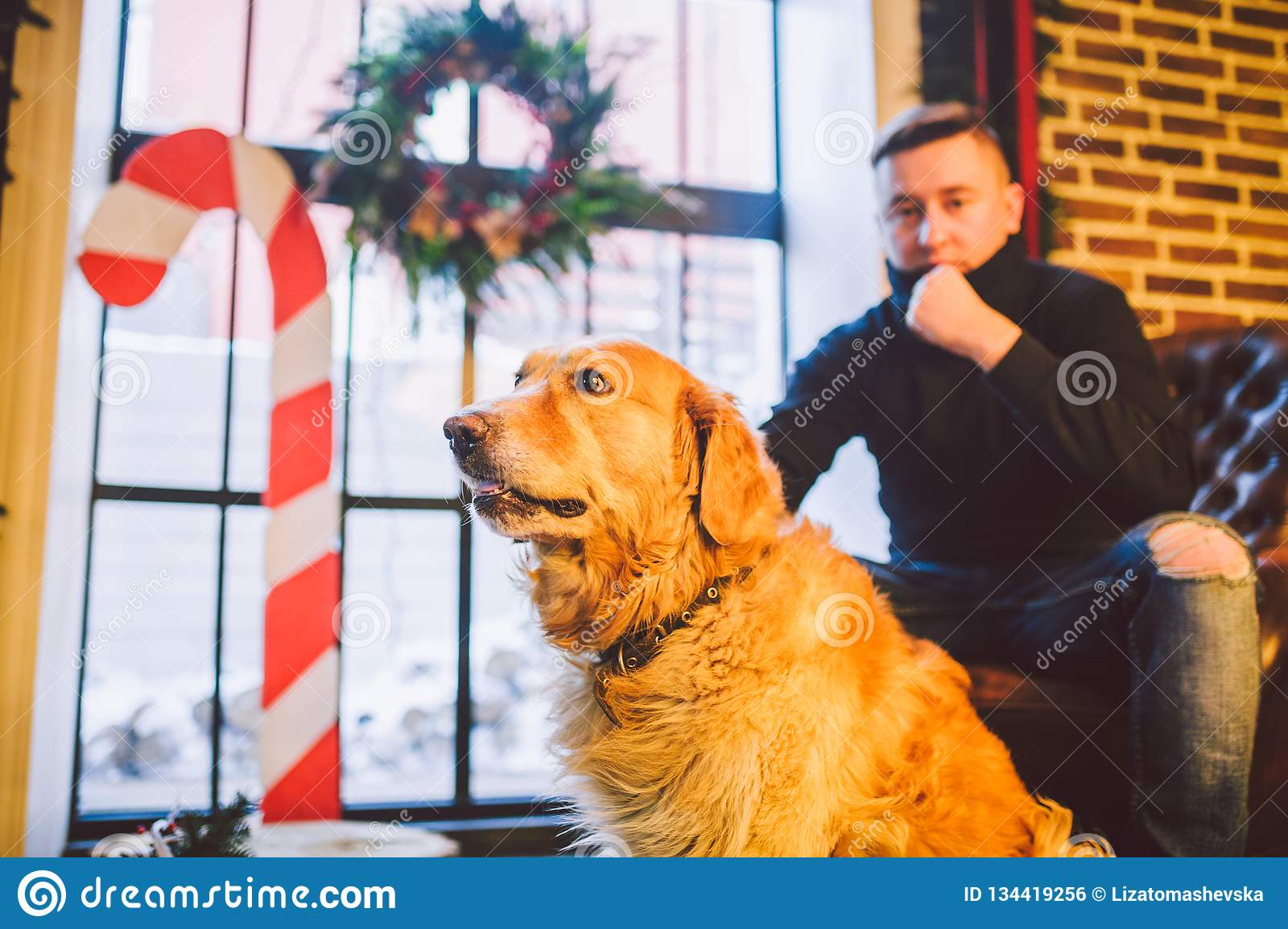 The theme is the friendship of man and animal. Caucasian young male and pet dog breed Labrador Golden Retriever at home inside in