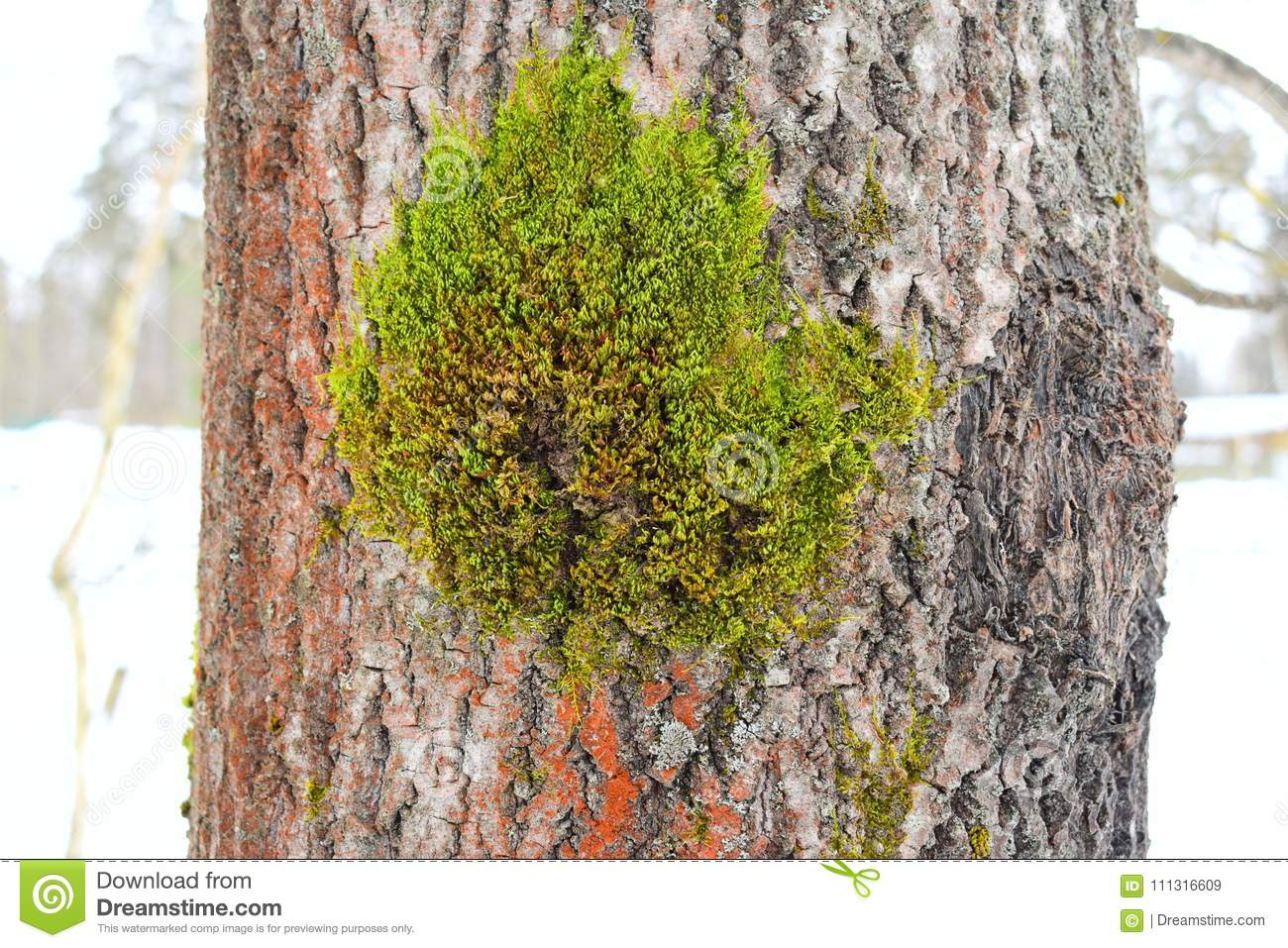 There Are Variations In Growth Types In A Single Lichen