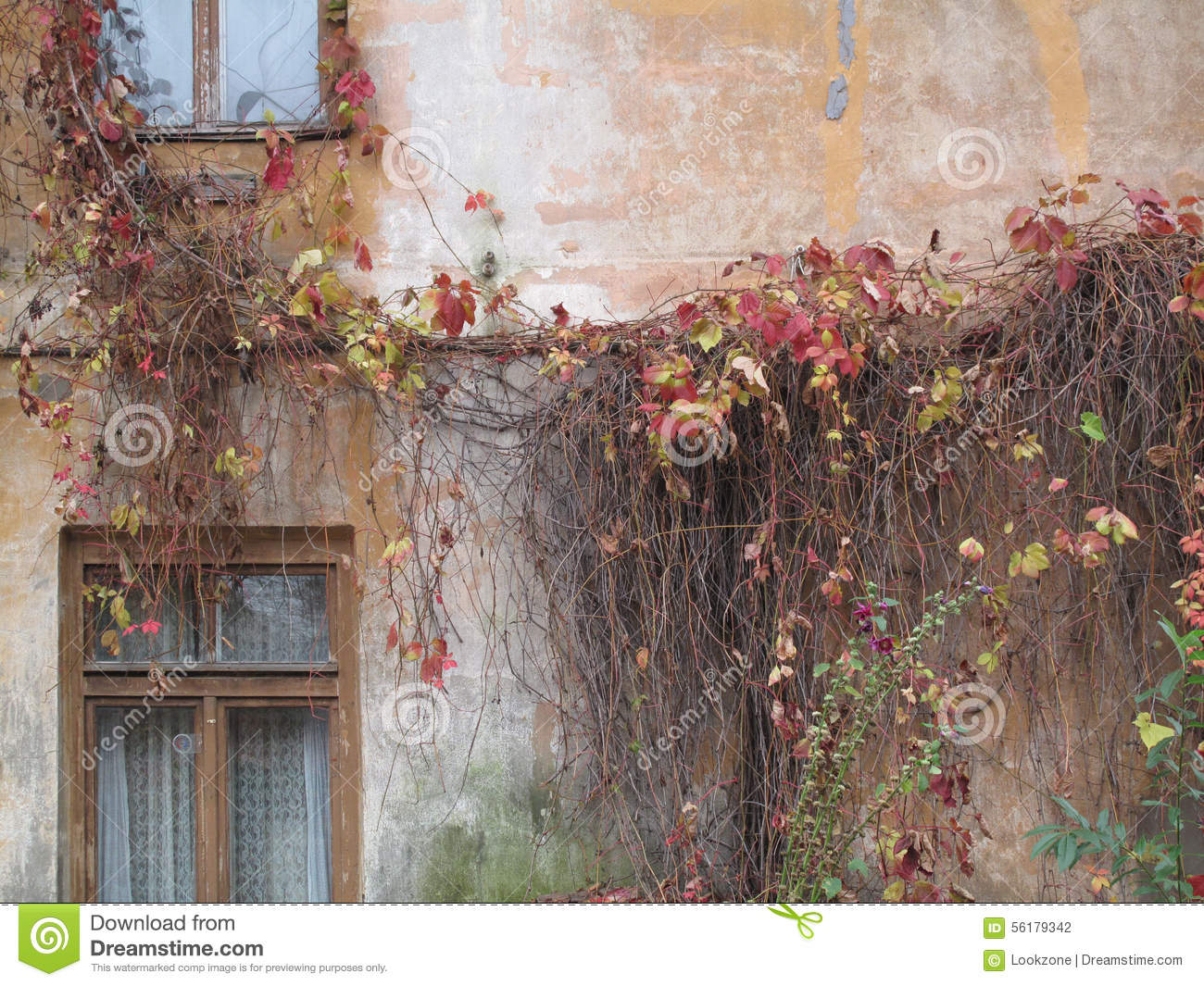 Climbing vines for walls - Thick Climbing Vines On An Old Town Building Wall Stock Photography
