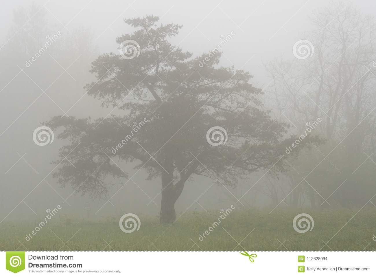 Thick Fog Surrounds Tree in the Mountains