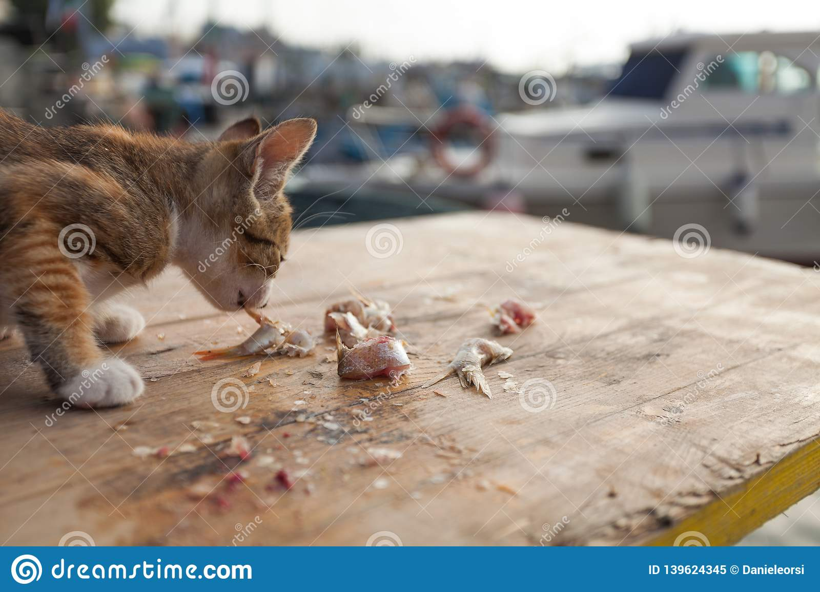 Thin little cat is eating some fish on a wooden table at the harbour