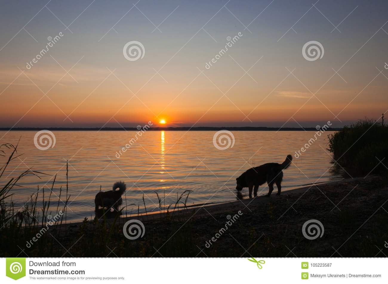 Dog training in the Volyn region: a selection of sites