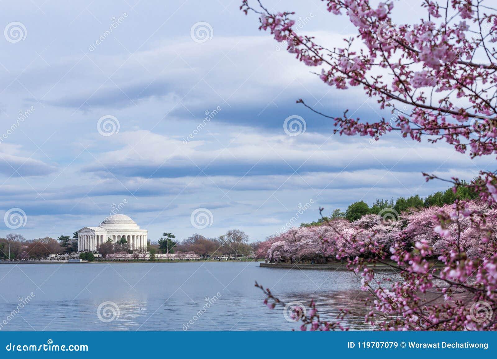 Thomas Jefferson Memorial under Cherry Blossom Festival på den tidvattens- handfatet, Washington DC