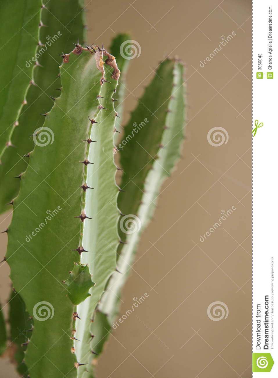 thorns on an indoor cactus stock photos