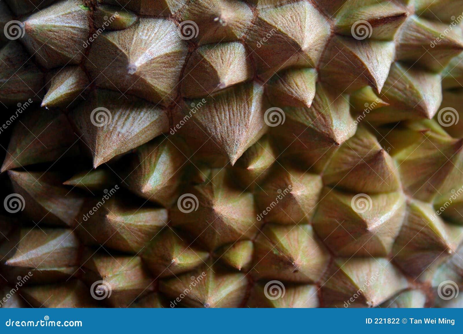 Thorny durian