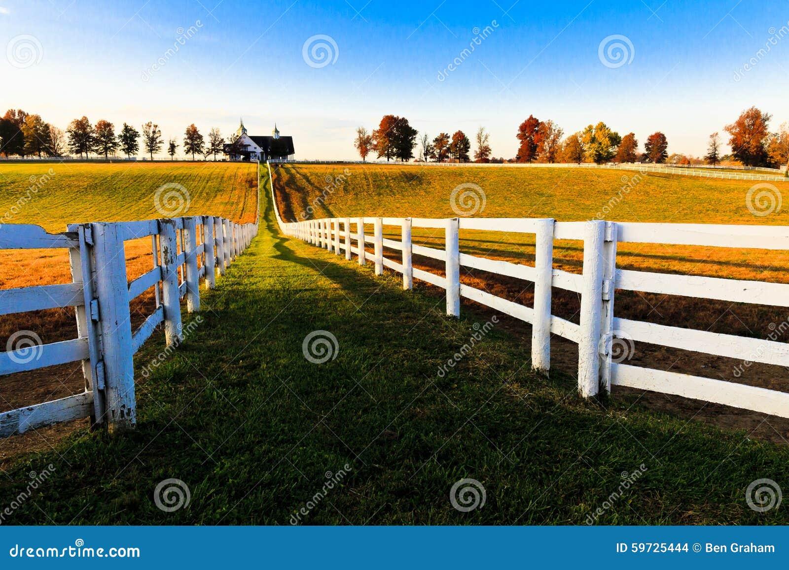 Thoroughbred αγρόκτημα αλόγων του Κεντάκυ
