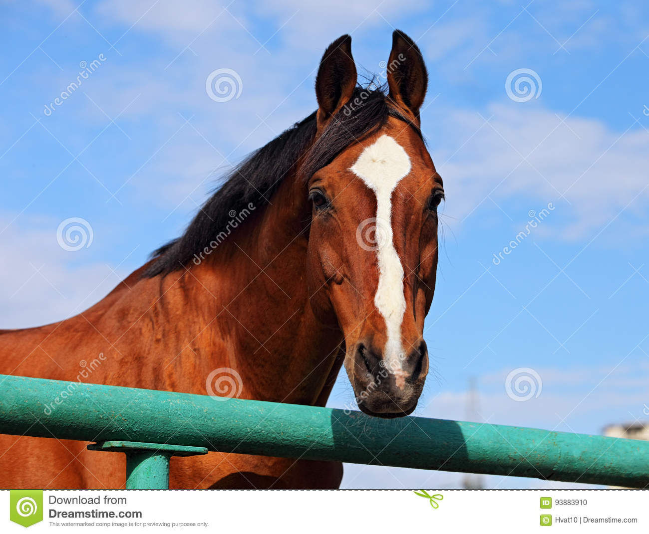 Thoroughbred horse in farm