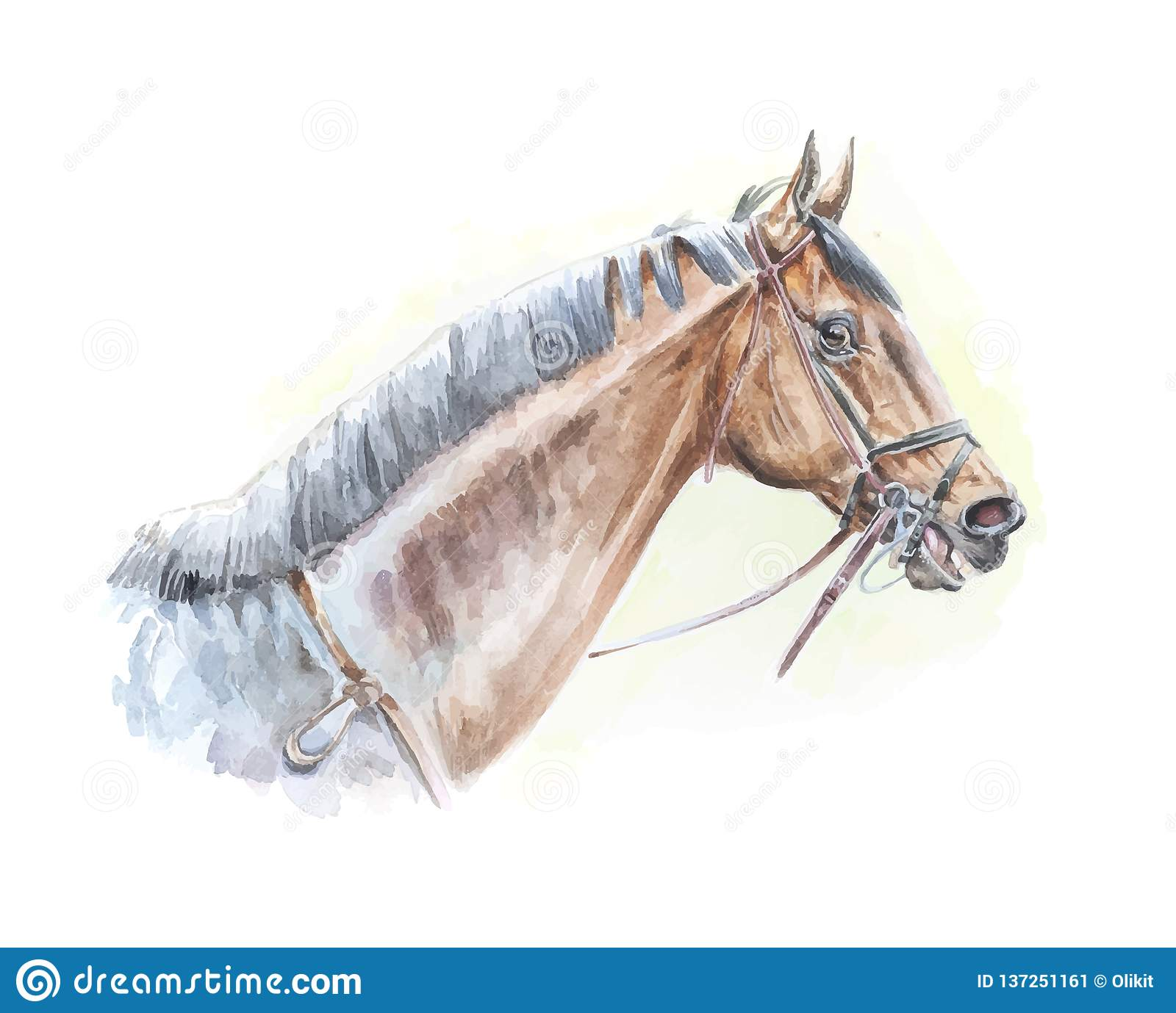 Thoroughbred Horse Watercolor Painting Portrait In Vector Format Stock Vector Illustration Of Thoroughbred Farm 137251161