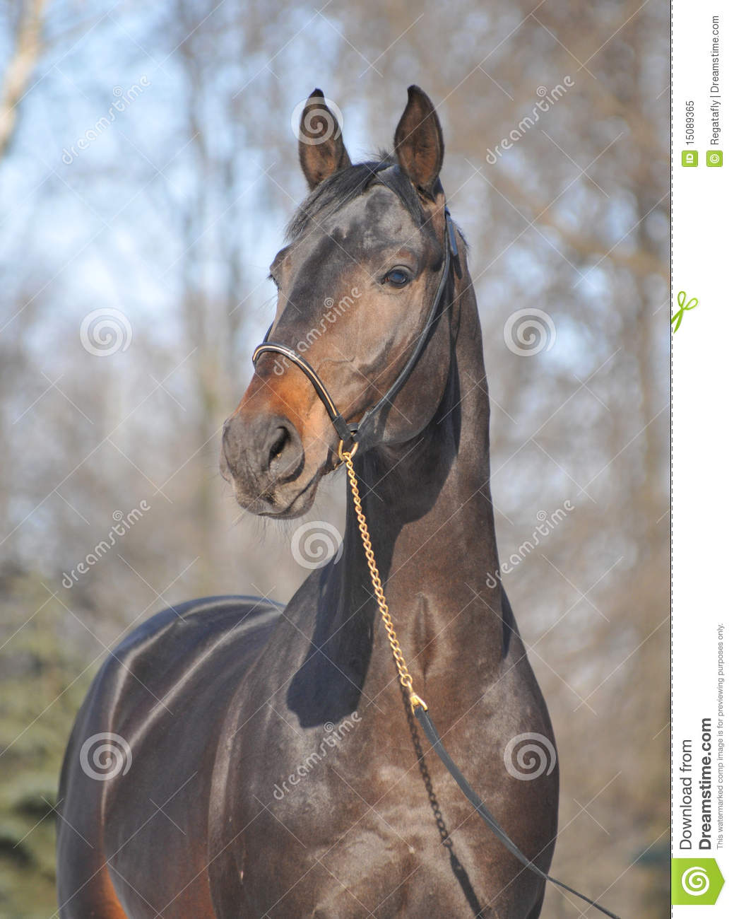 Thoroughbred quotes for Thoroughbred tattoo lookup