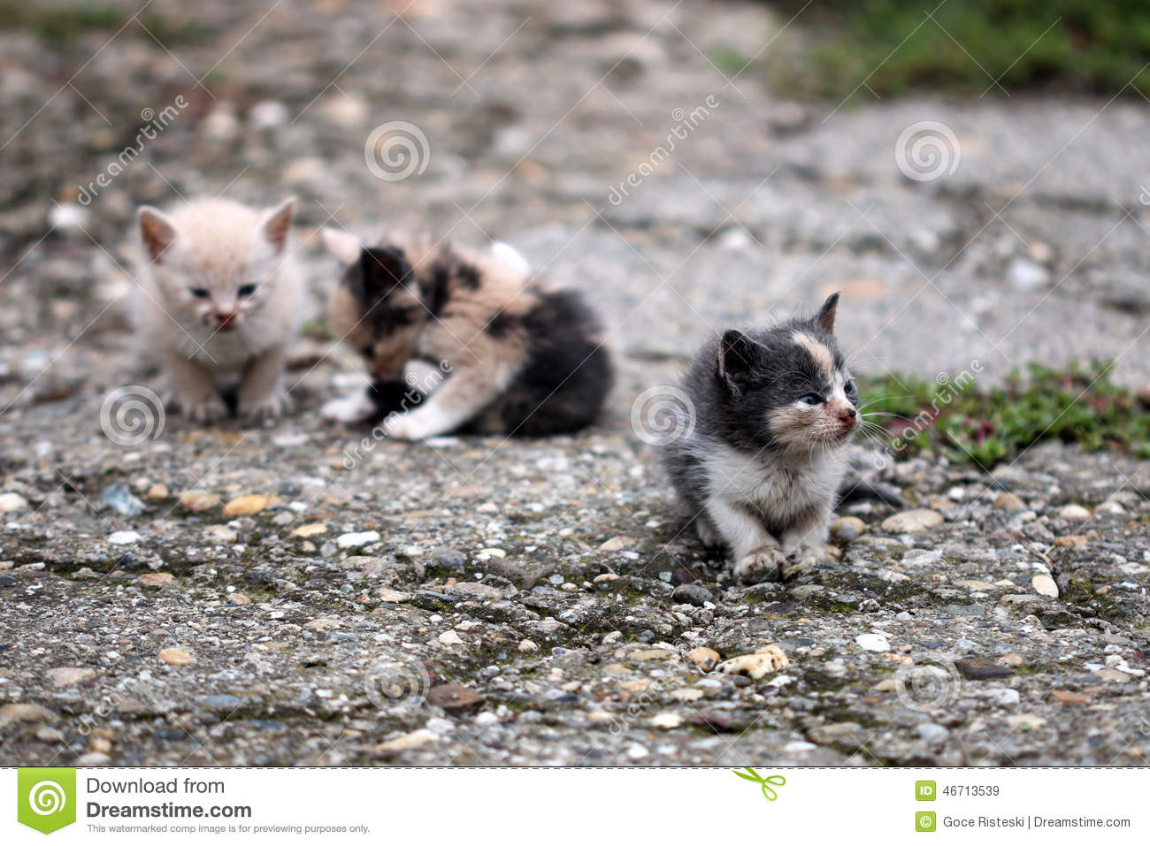 Picture Of Abandoned Dogs Cats