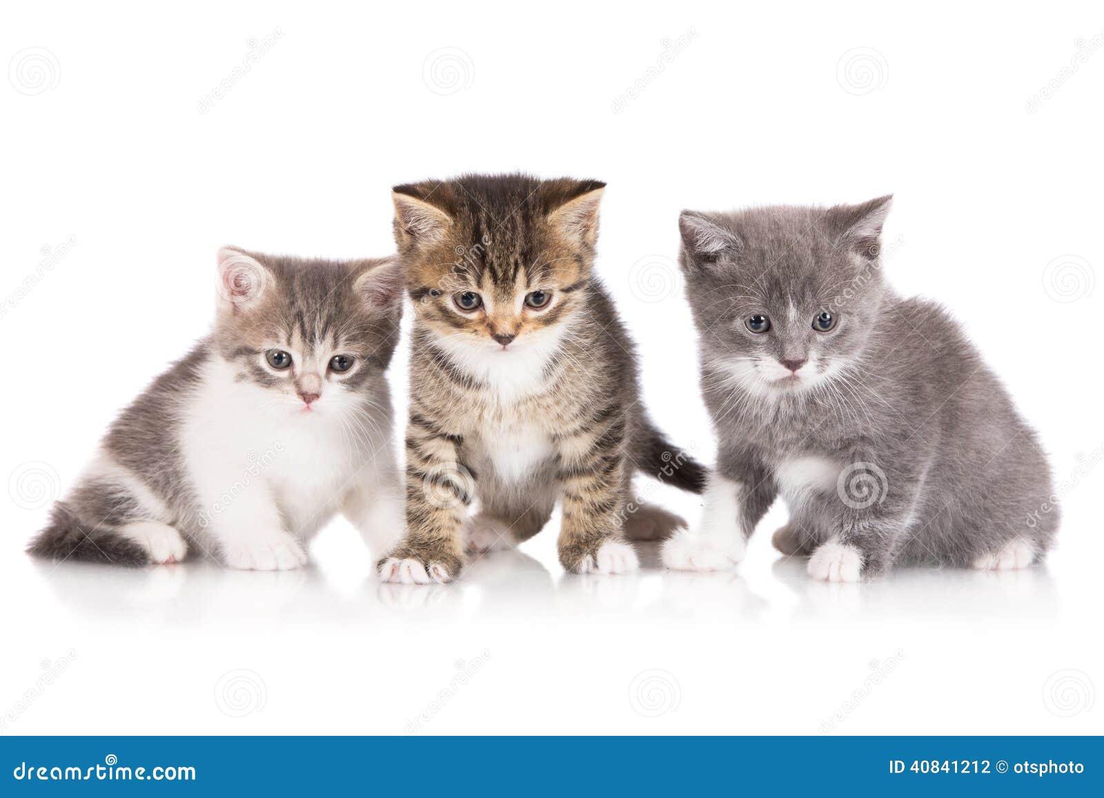 Three adorable kittens