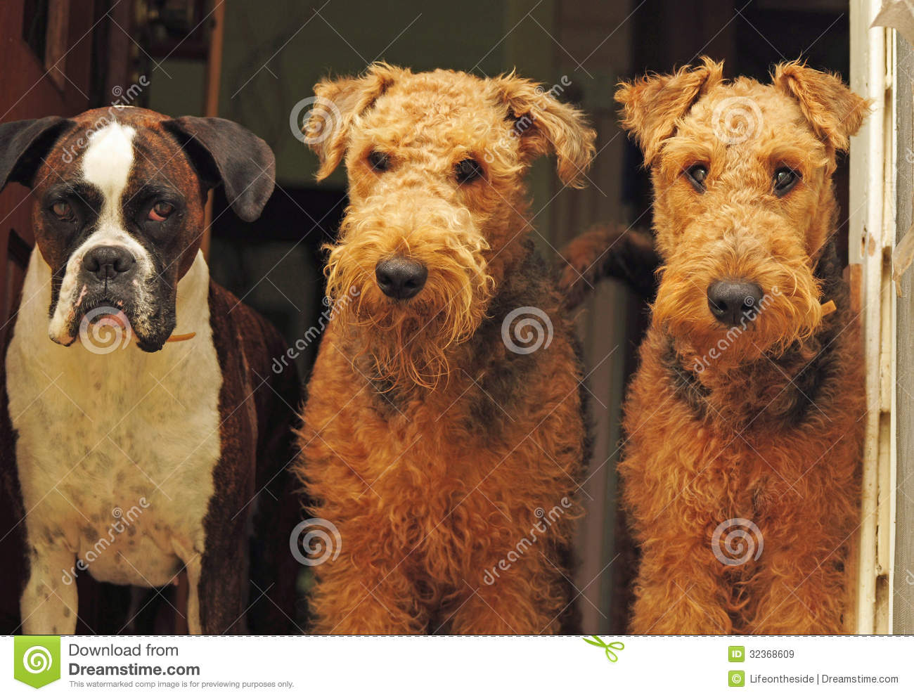 The Three Amigosdifferent Breed Dogs,best Friends Stock Image  Image: 32368609