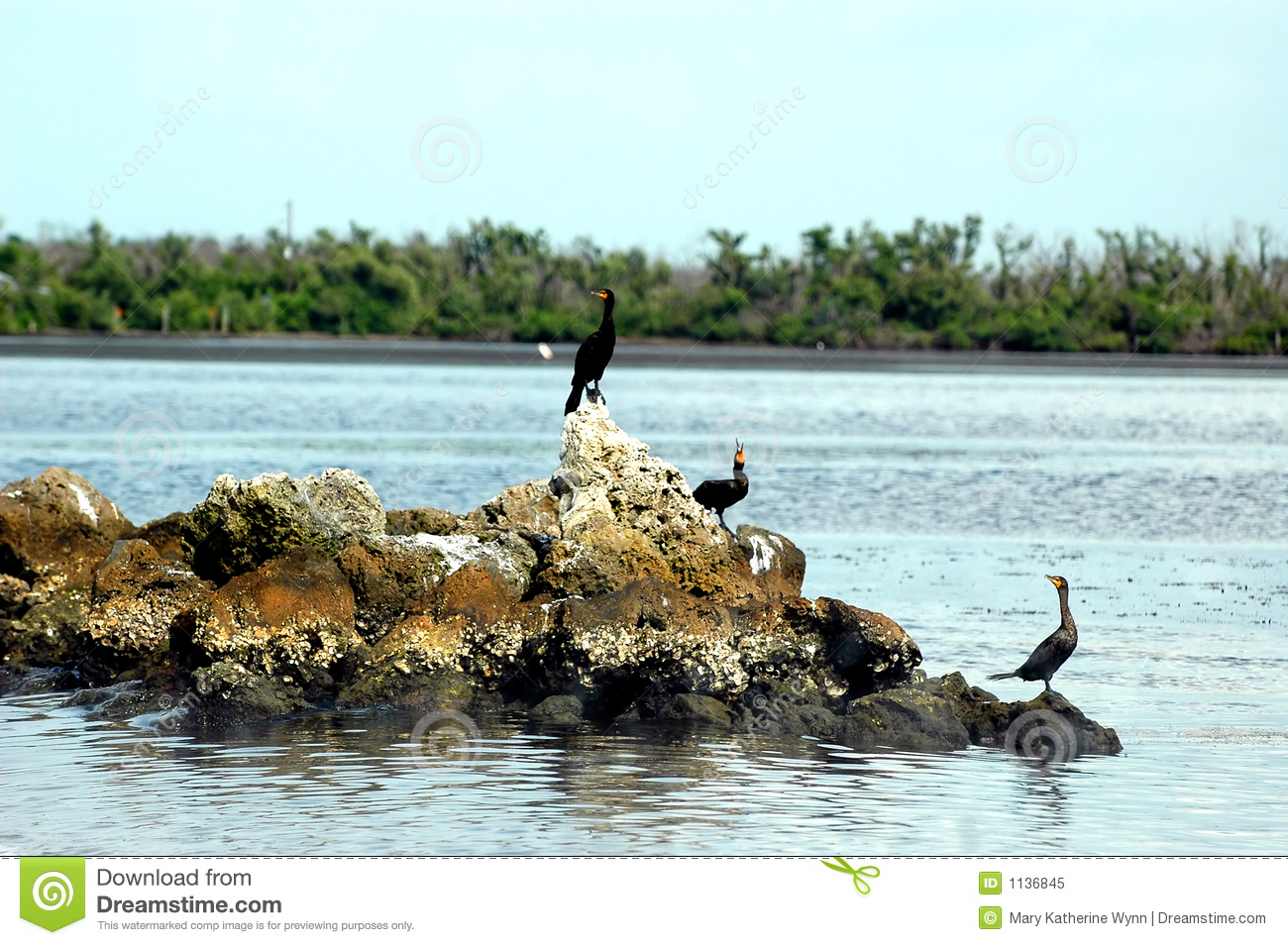 Three anhinga birds