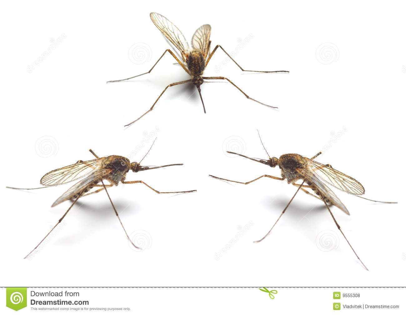 flying mosquito clipart