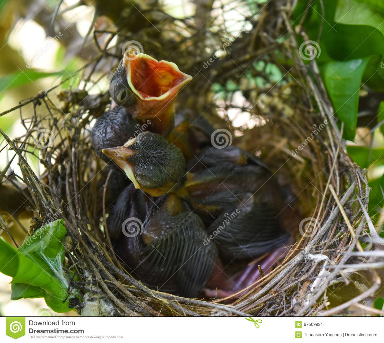 Three babies in the nest.