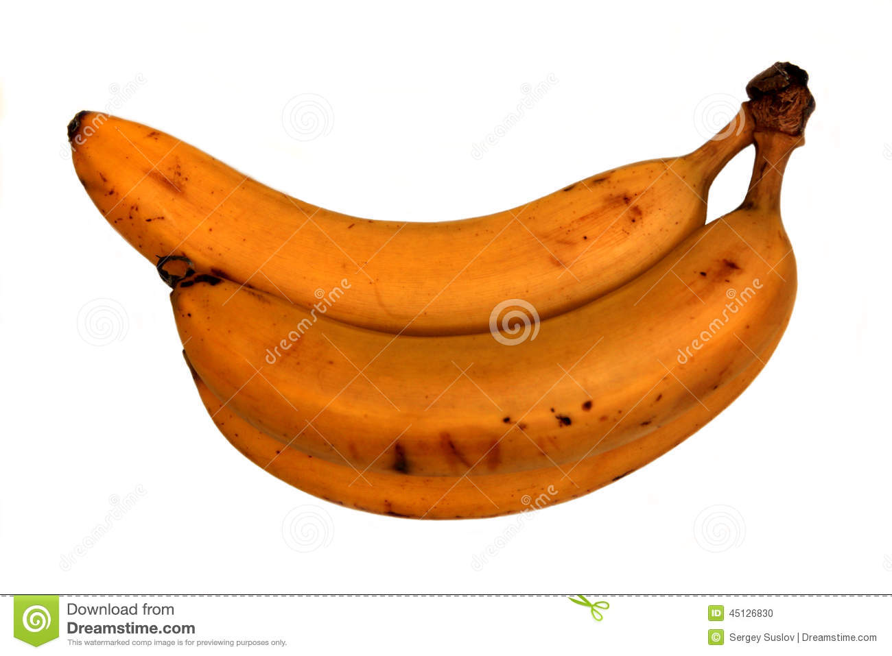 Three bananas in bunch isolated (separated) on white