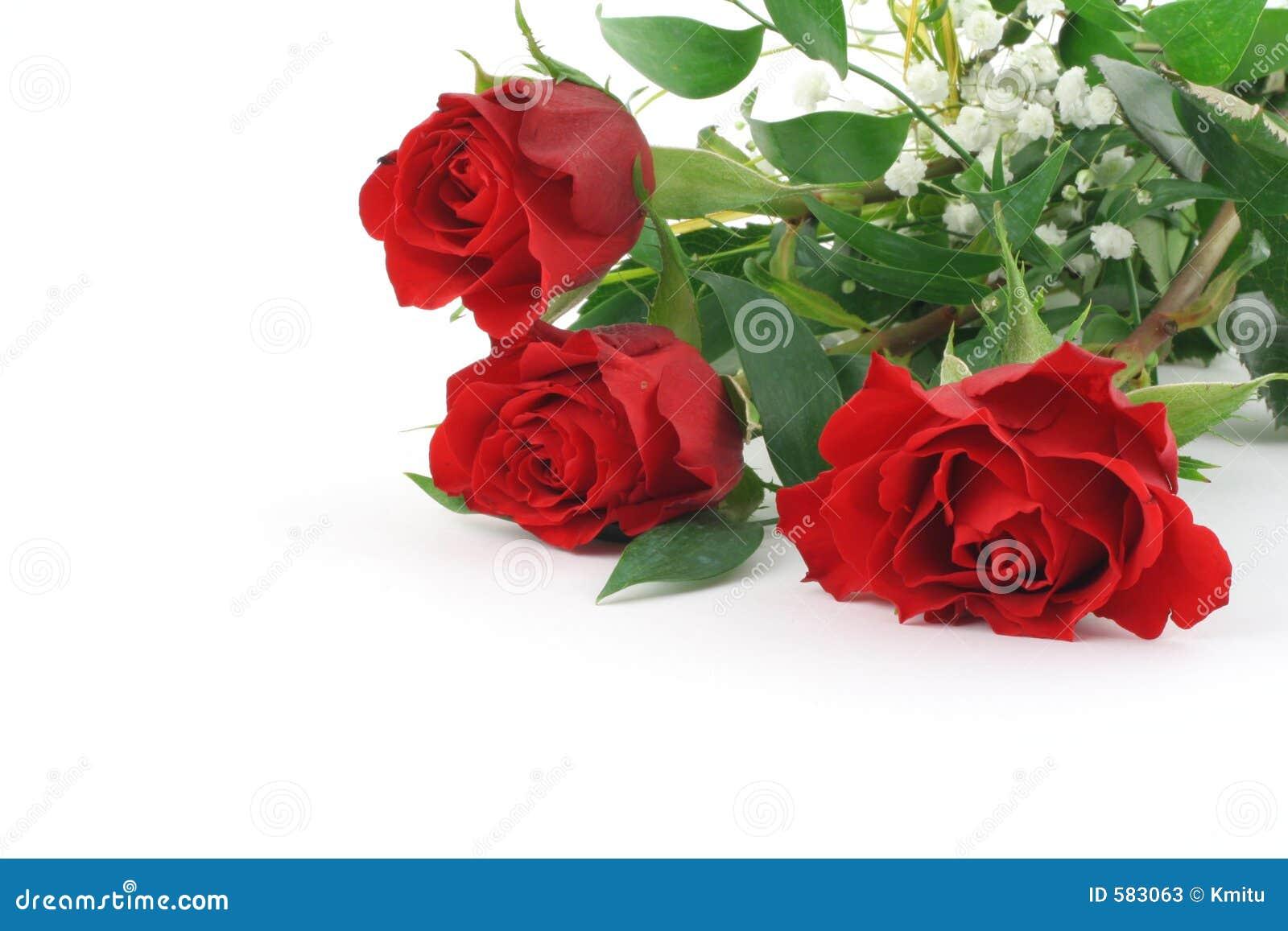 three beautiful maroon roses with decoration stock photos - image
