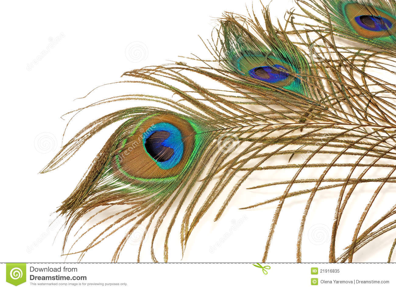 Three beautiful peacock feather royalty free stock photo image 21916835 - Beautiful peacock feather ...