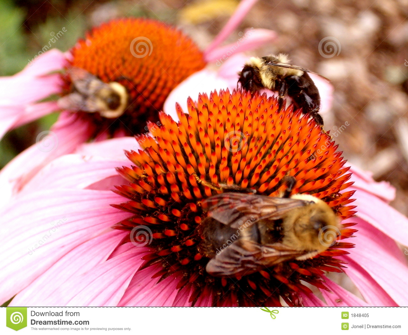Three Bees On Bright Flowers