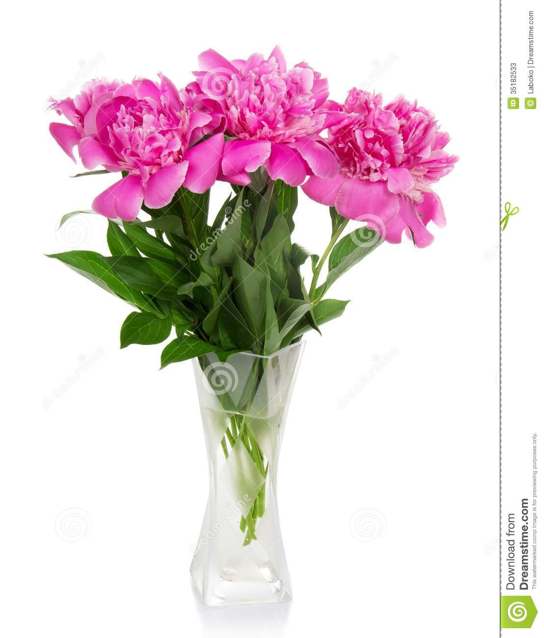 Three Big Pink Peonies In The Glass Vase Stock Image