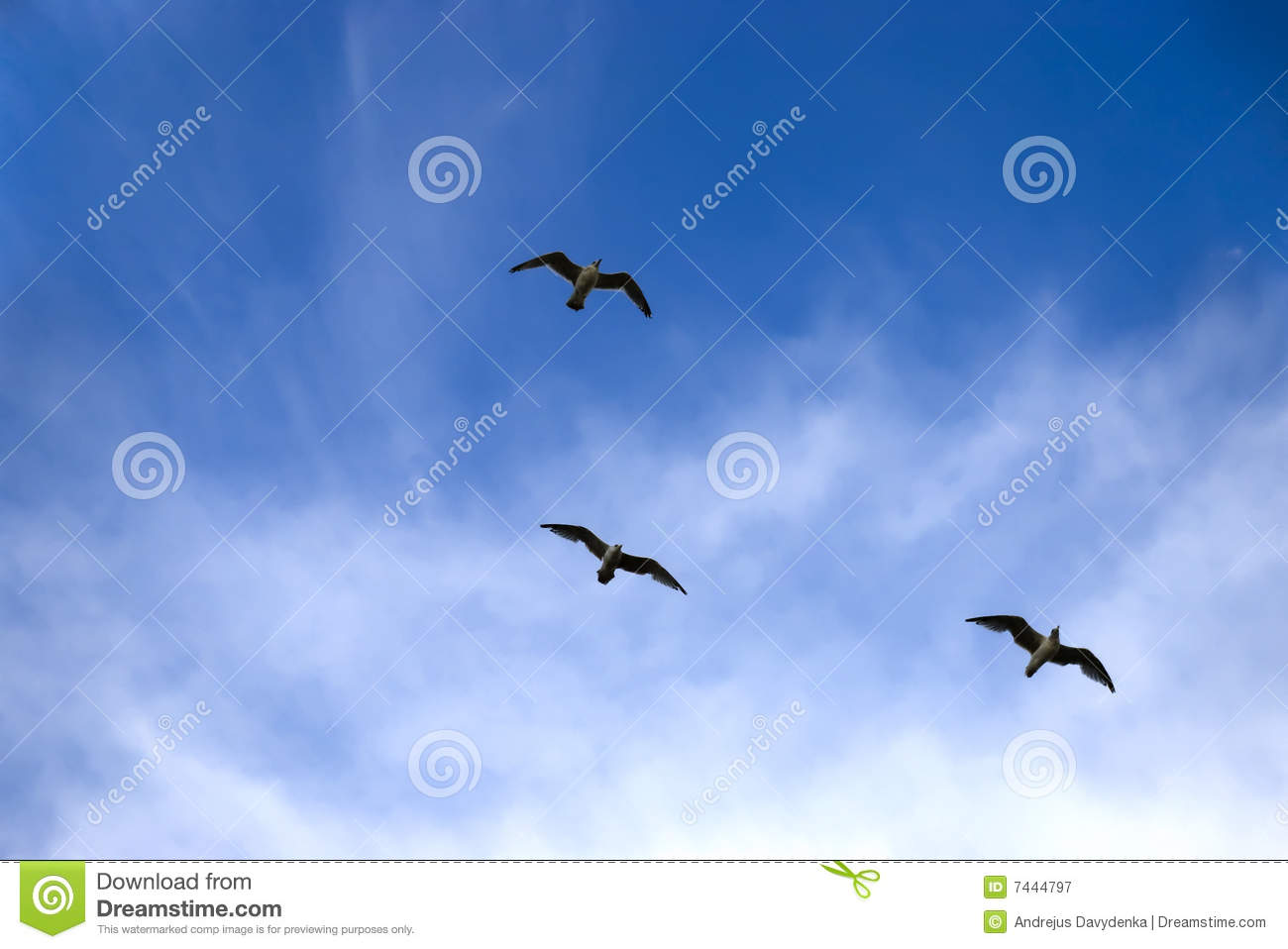 Royalty Free Stock Photography Three Birds Flying Blue Sky Background ...