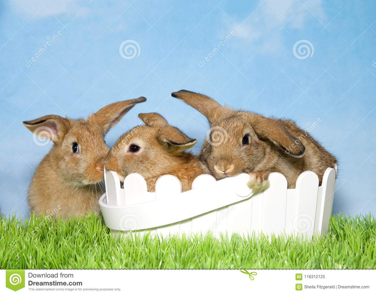 Three brown bunnies on grass two in easter basket