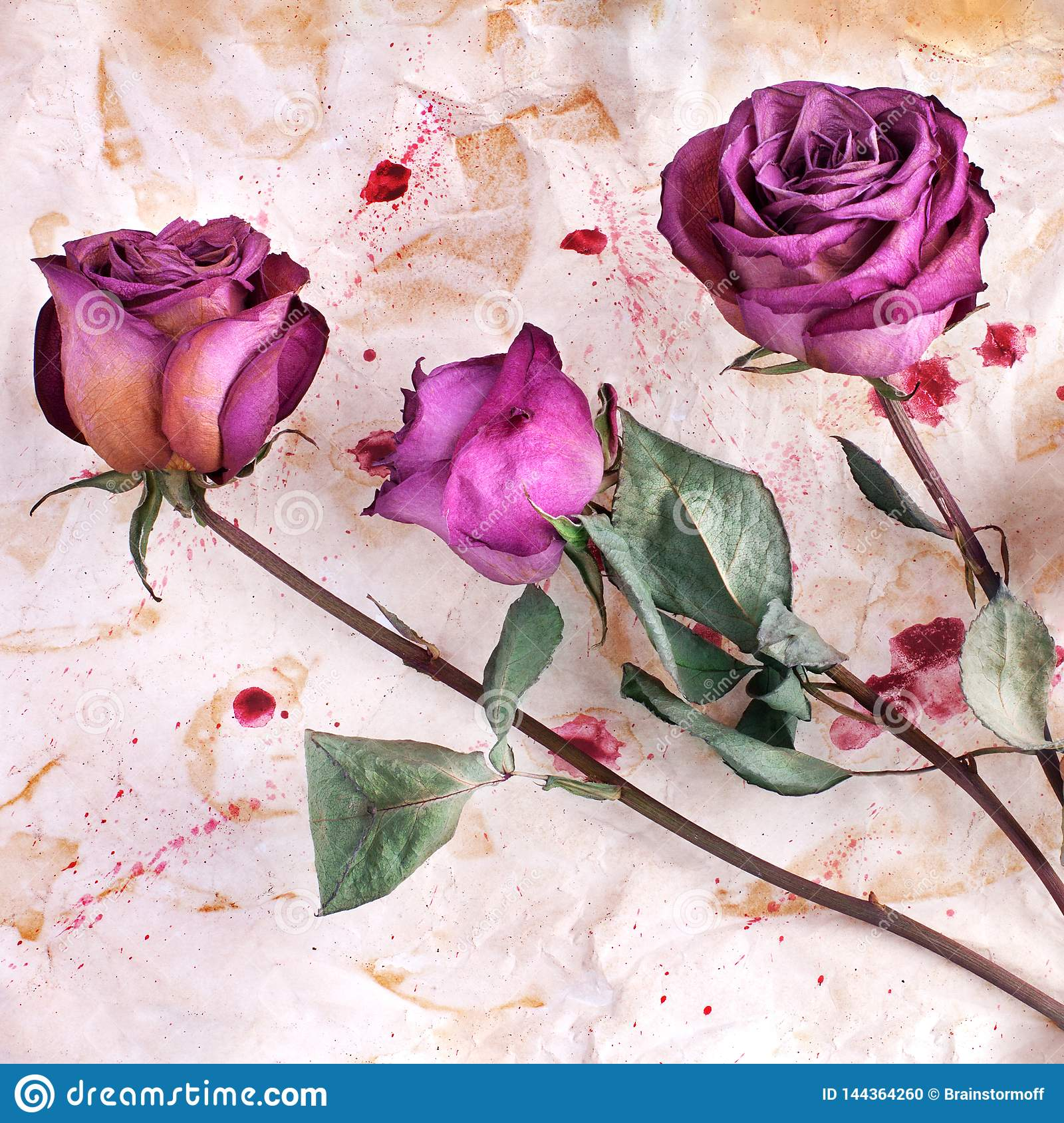 Three burgundy rose flowers on painted crumpled aged paper background close up, holiday invitation or greeting card design
