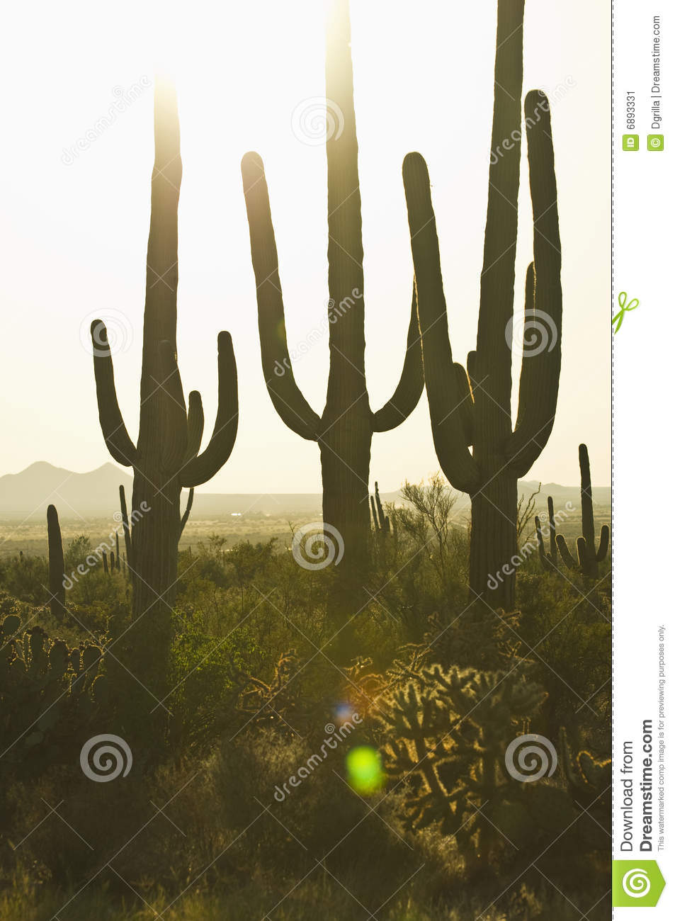 Download Three cacti at sunset stock image. Image of giants, desert - 6893331