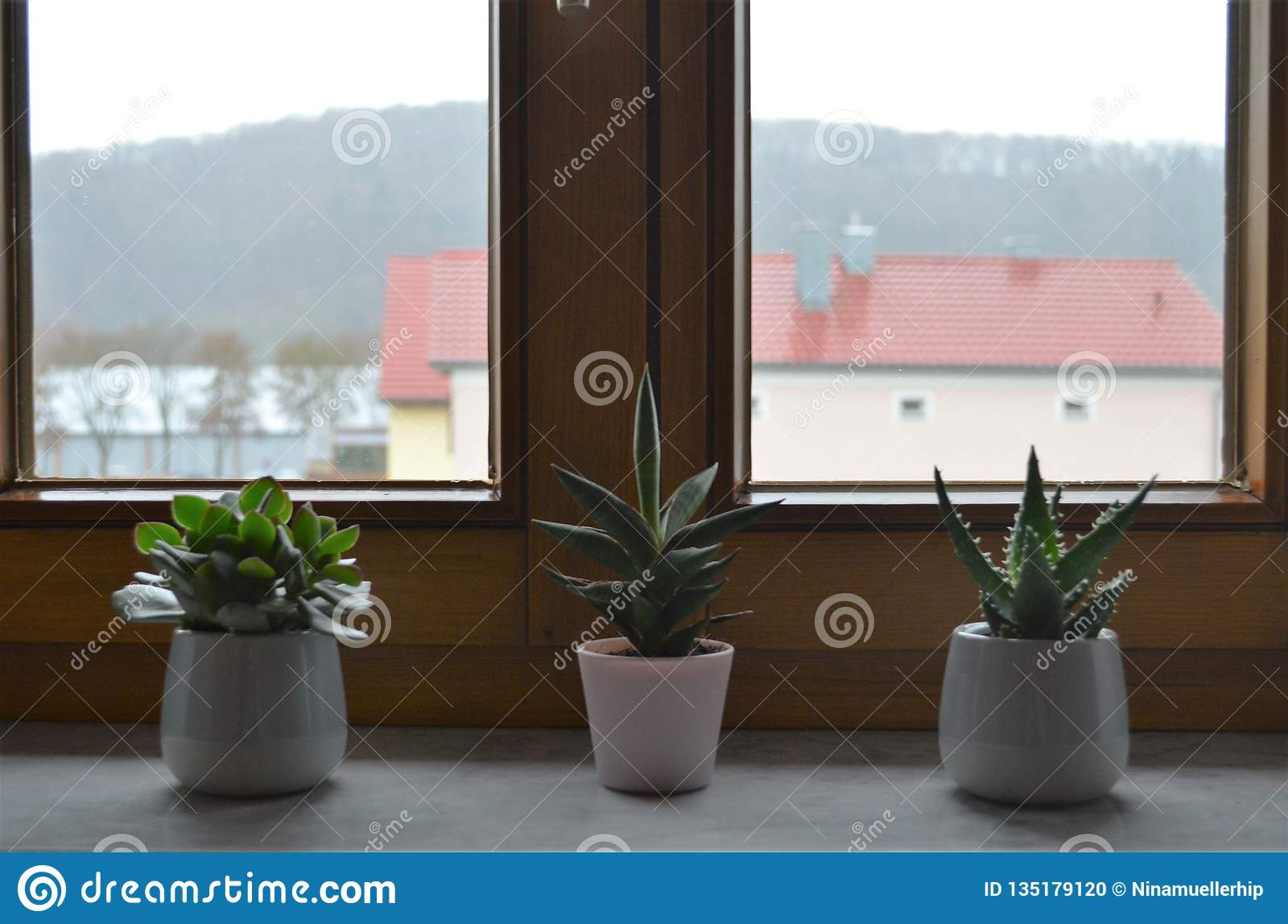 Three Cactus Plants On A Windowsill In A Row As Decoration