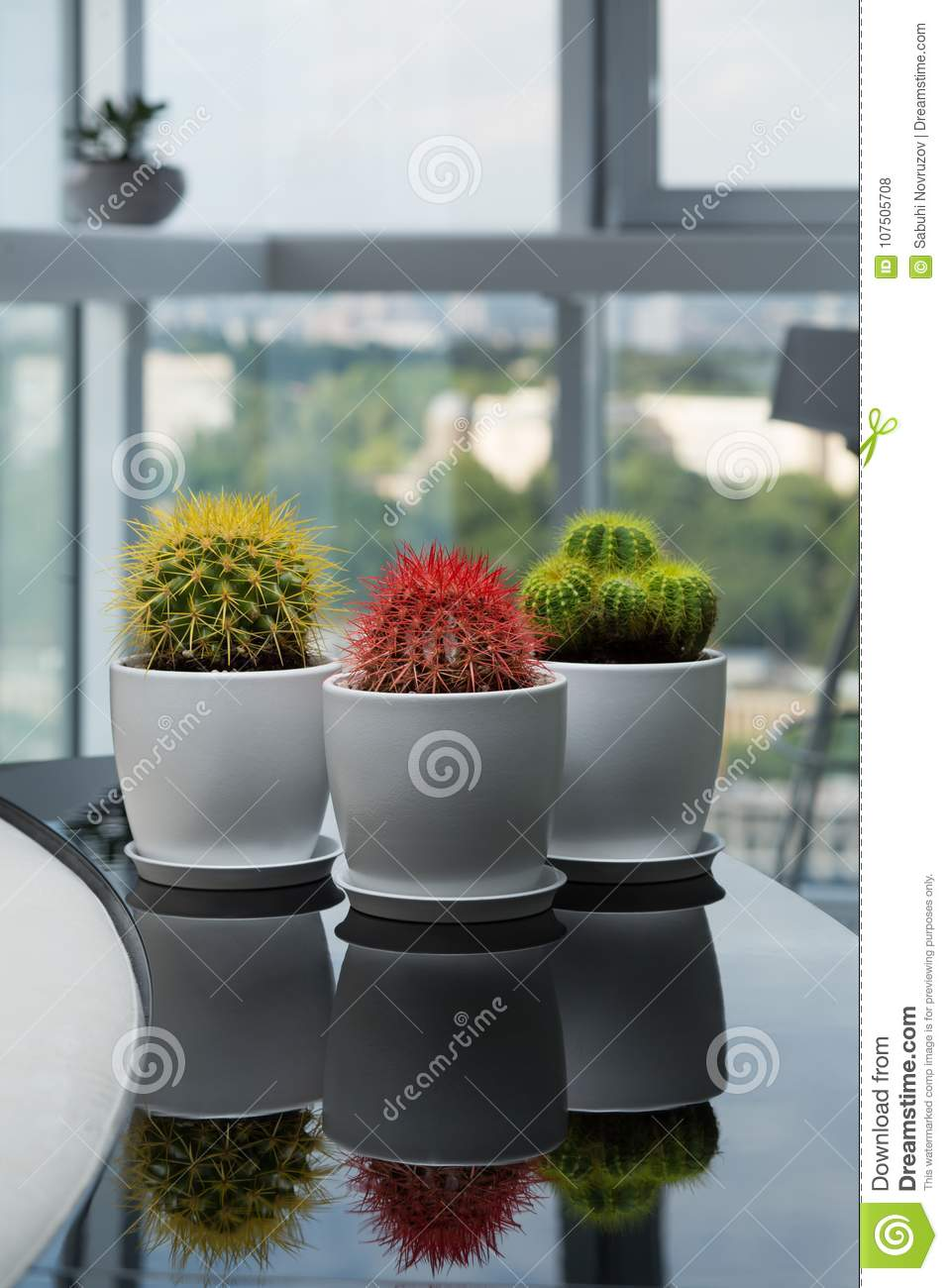Download Three Cactus On The Table. House Plants In The Room. Modern  Interior.
