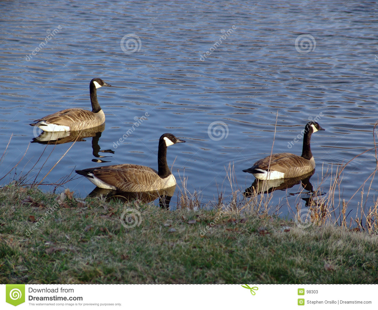 Three Canadian Geese