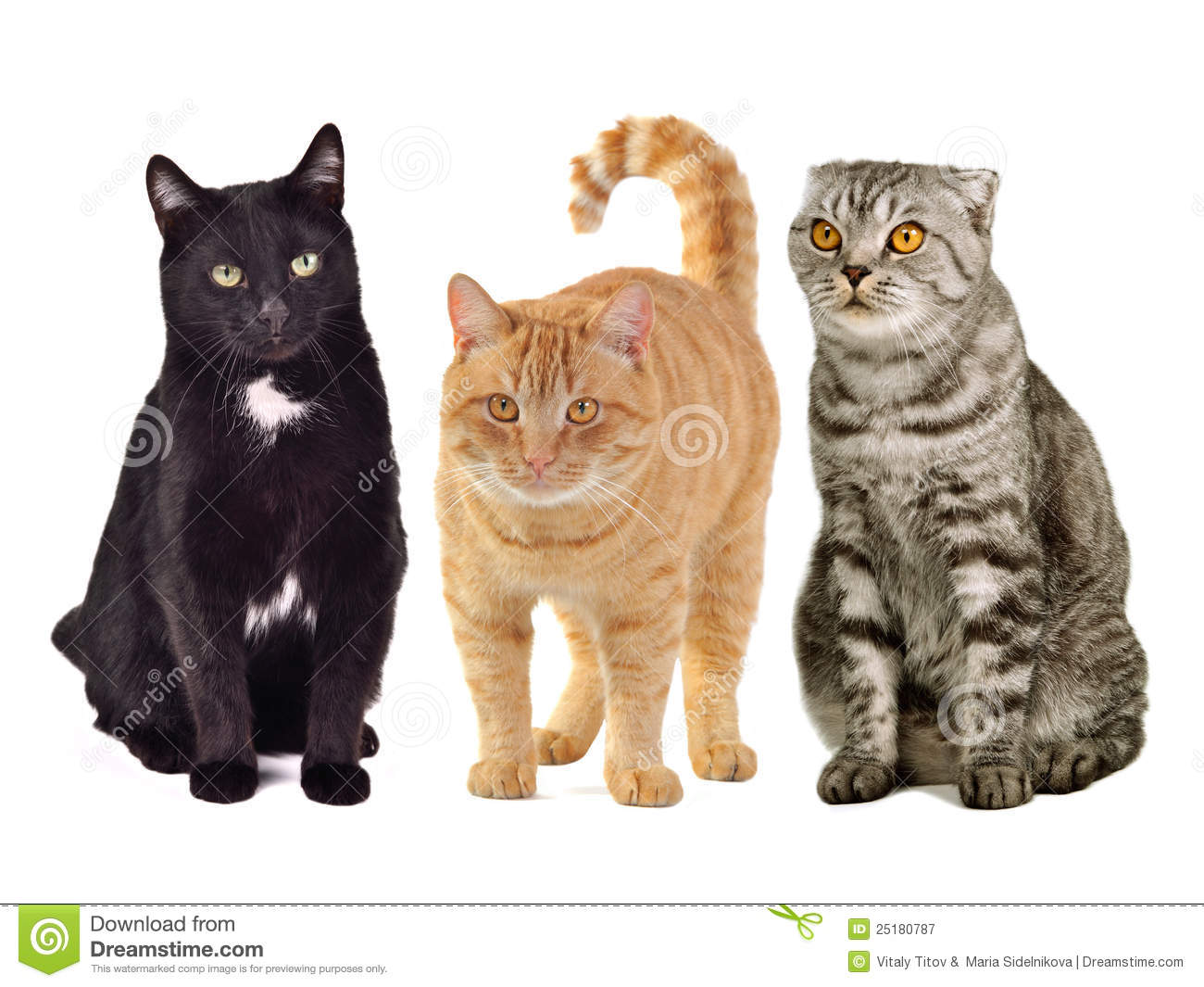 Three cats together stock image image of beautiful fold The three cats