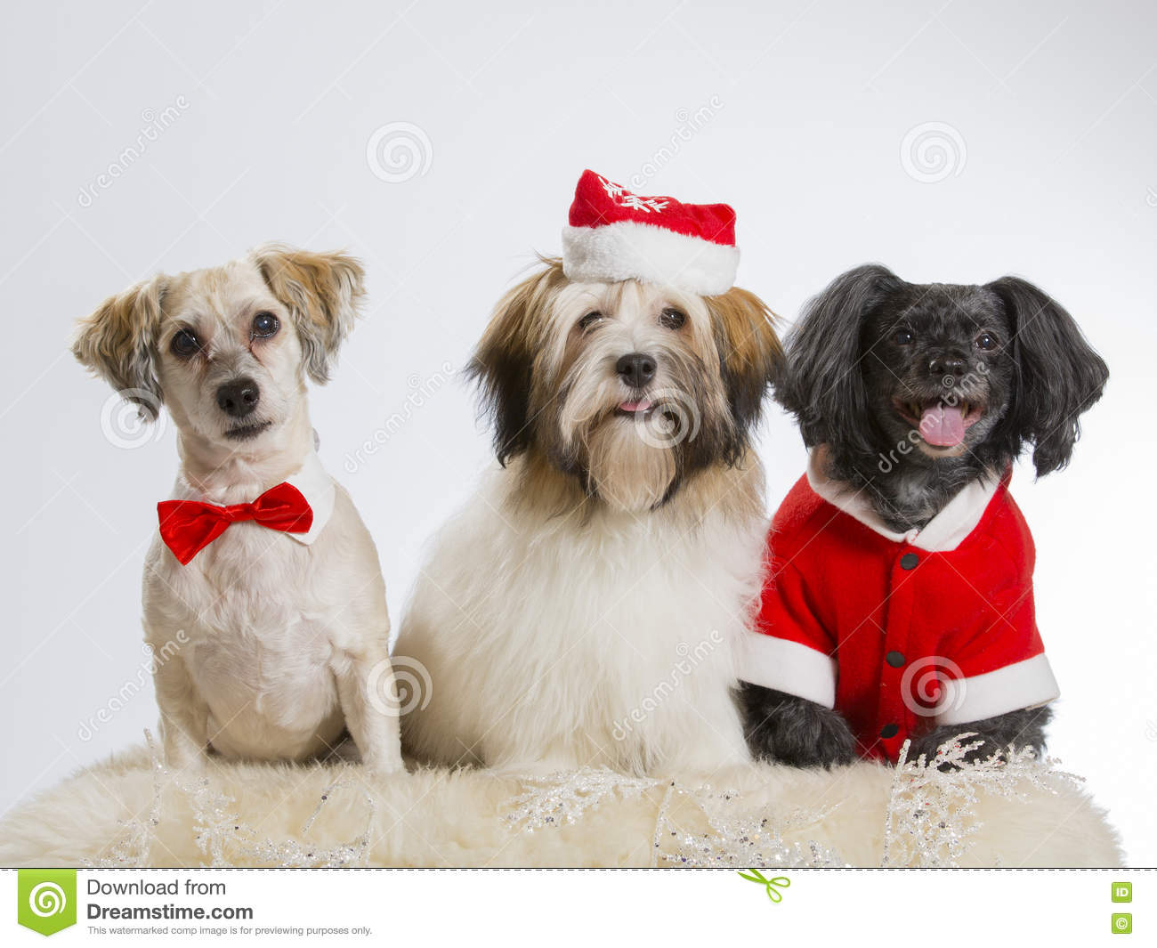 Three Christmas dogs side by side.