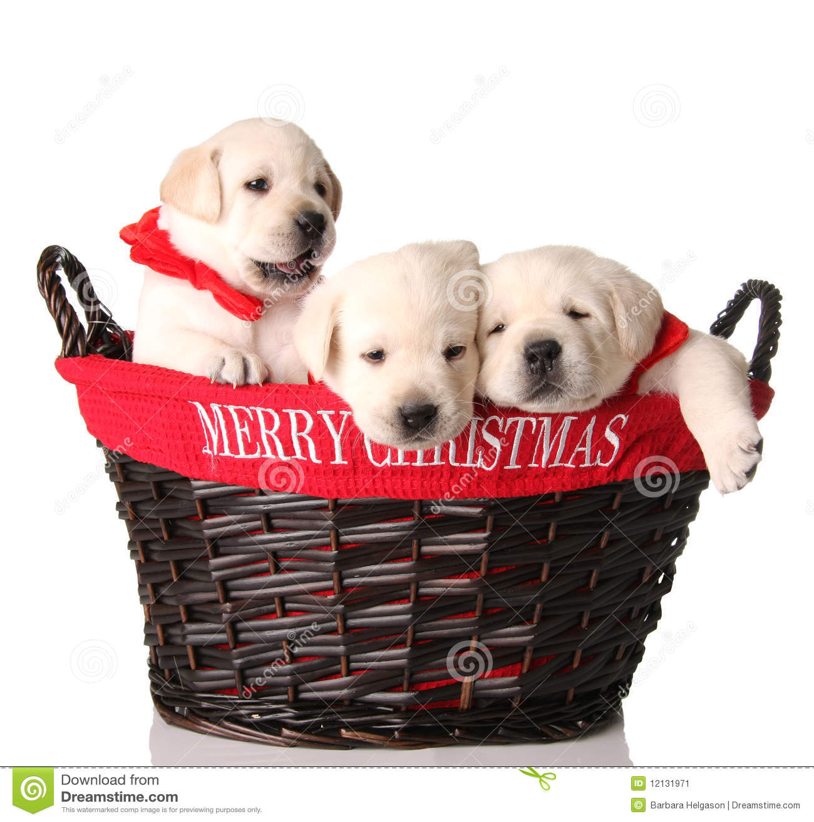 Three Christmas Puppies Stock Image - Image: 12131971