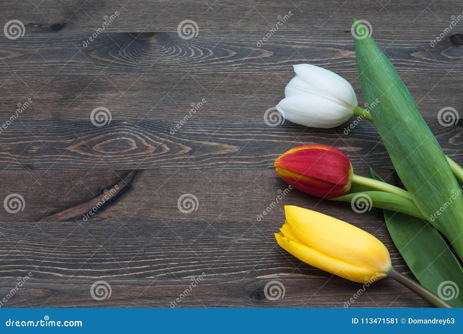Three multicolored tulips against a backdrop of dark boards.