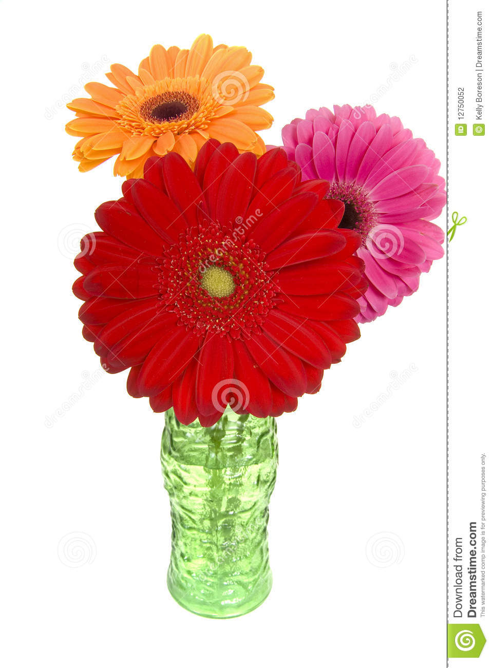 Three Colorful Gerber Daisies In Vase Stock Photo - Image ...
