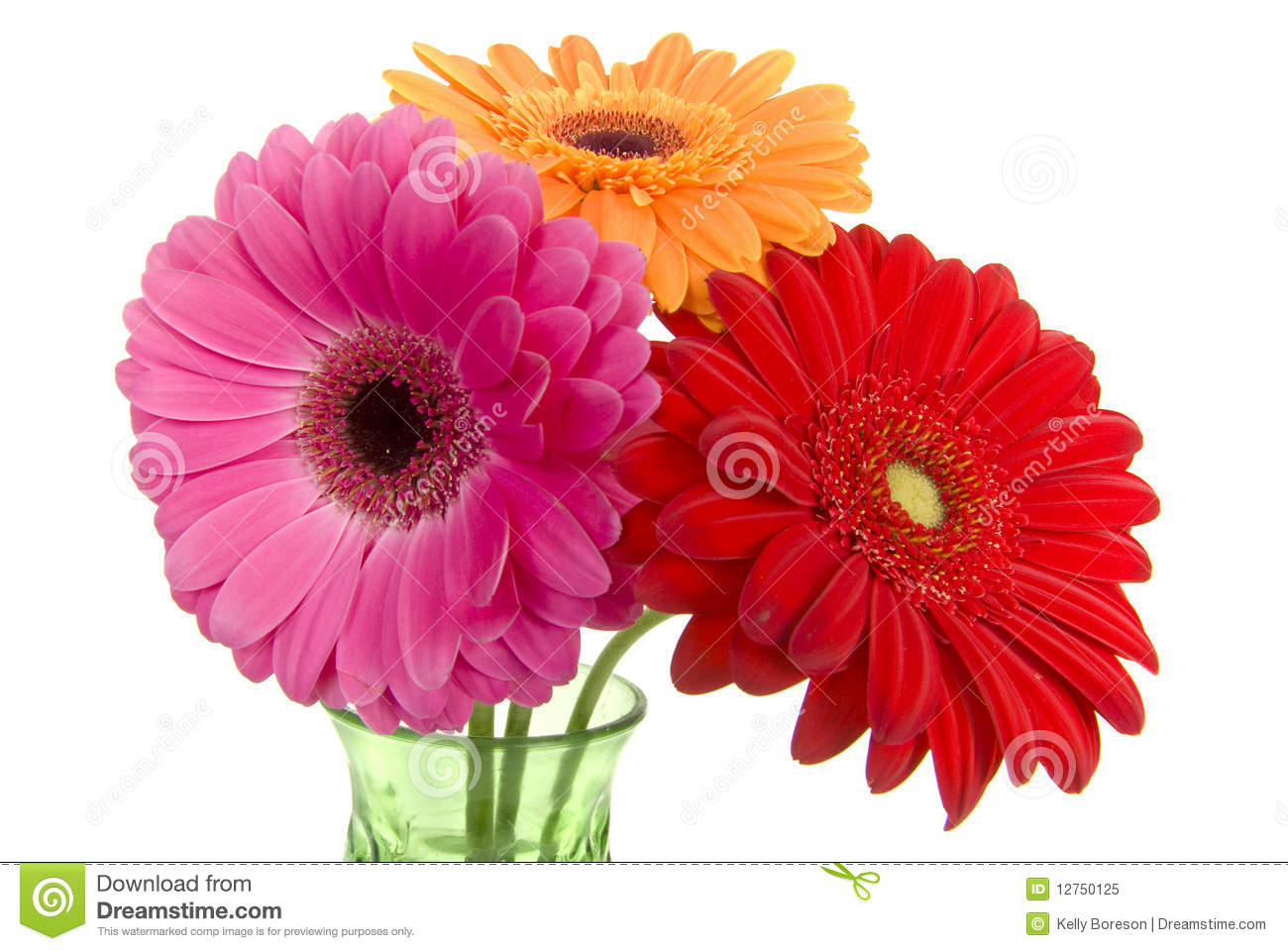 Three Colorful Gerber Daisies In Vase Stock Image - Image ...