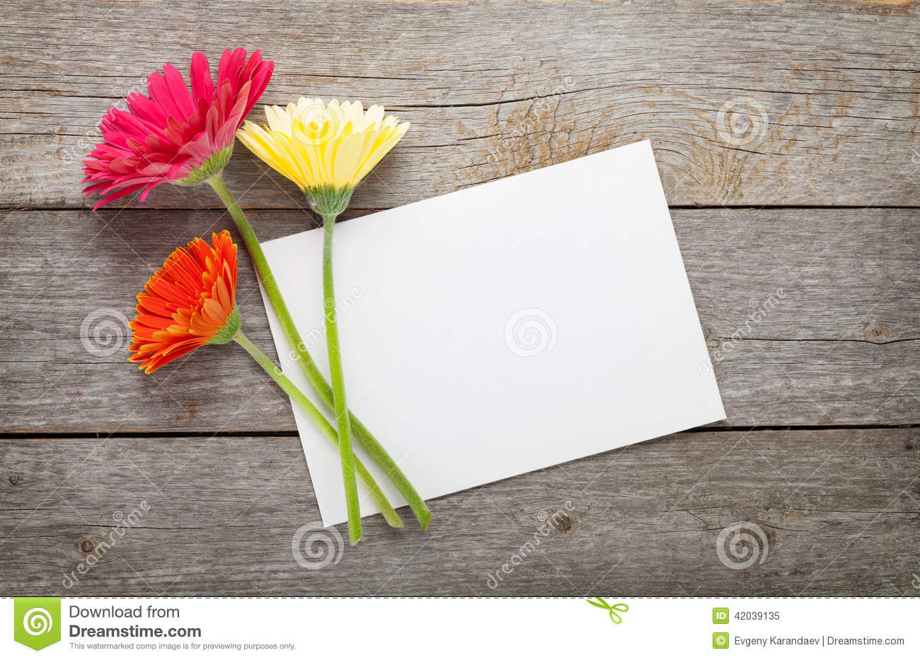 Purple gerbera flower and blank greeting card stock image image of three colorful gerbera flowers and blank greeting card royalty free stock photo kristyandbryce Images