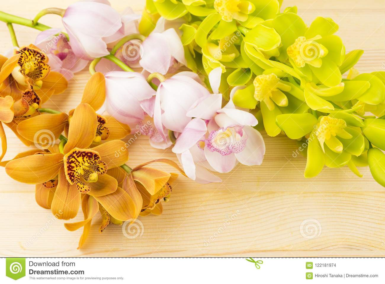 Three colors of orchid flowers
