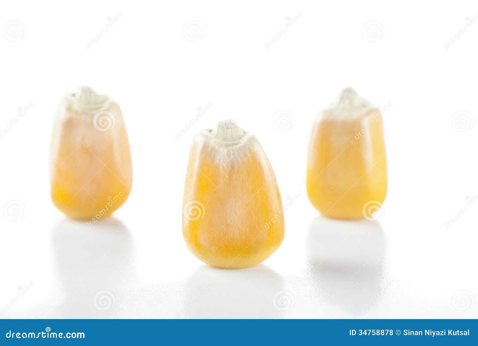 Three Corn Seeds Royalty Free Stock Photos - Image: 34758878