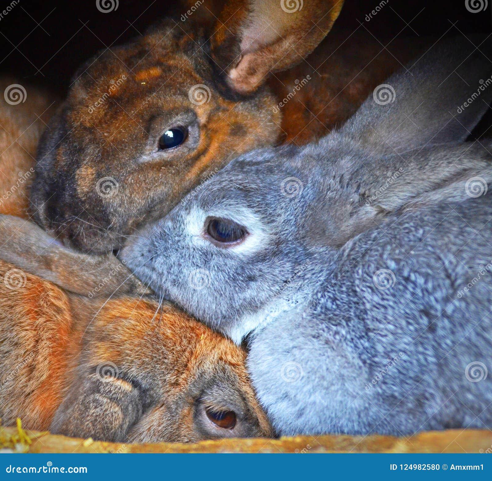 Three cosy rabbits aba45066f