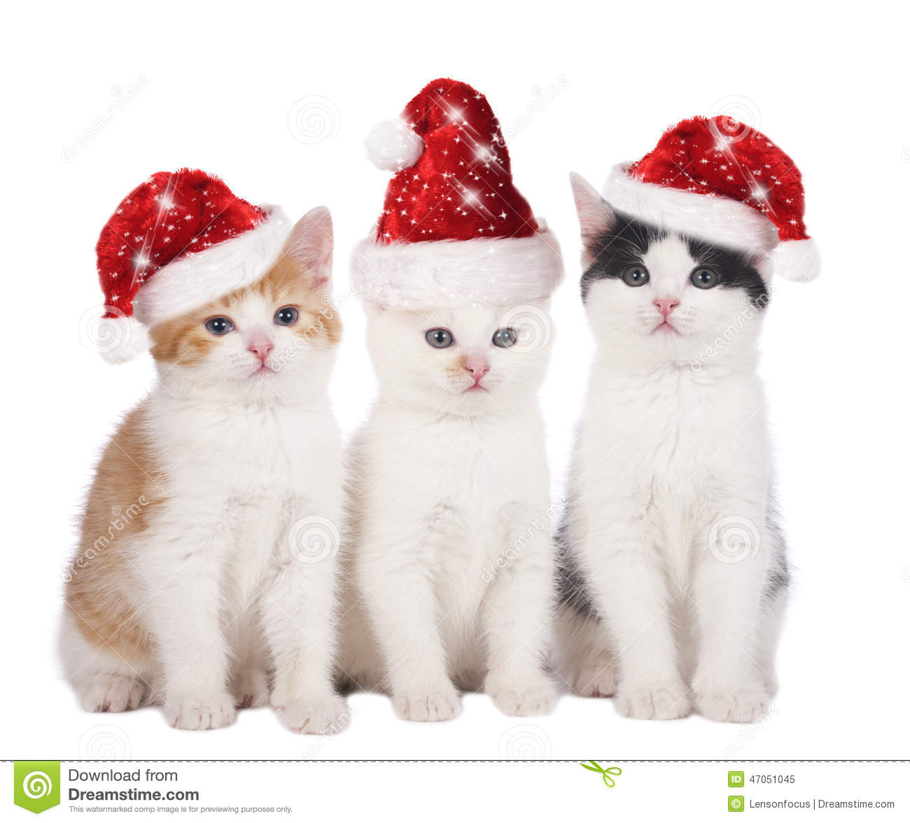Images Of Cats With Christmas Hats