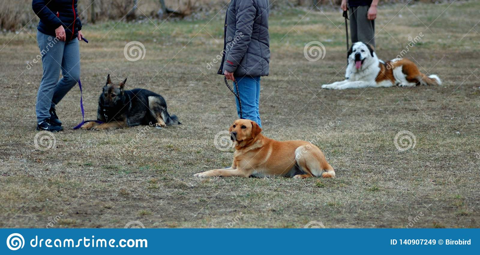 Three cute dogs laying on the ground,learning in dog-school